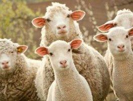 网上的薅羊毛赚零花钱是真的吗?靠谱吗?