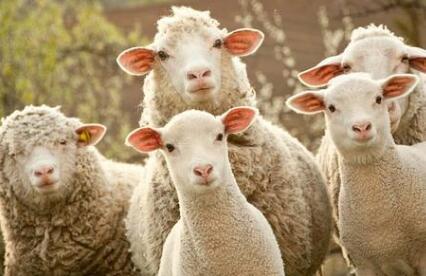网上的薅羊毛赚零花钱是真的吗?靠谱吗? 第1张